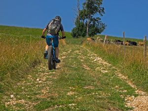 mountain bike, trail, bike